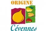 ORIGINE CEVENNES